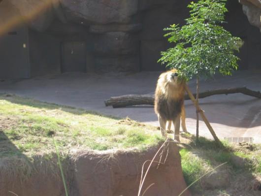 天王寺動物園のゴールデンタイムとは!