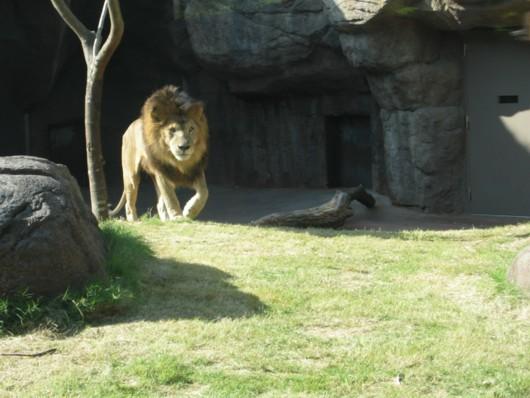 天王寺動物園:生態展示の楽しみ方